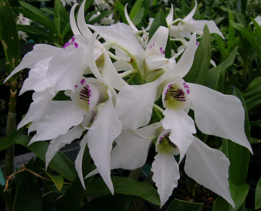 Orchid care phoenicia 39 s orchids How do you care for orchids after they bloom